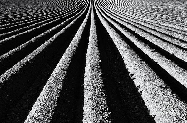Ploughed Field Print featuring the photograph Ridge And Furrow by Tim Gainey