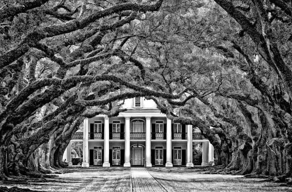 Oak Alley Plantation Print featuring the photograph Southern Class Monochrome by Steve Harrington