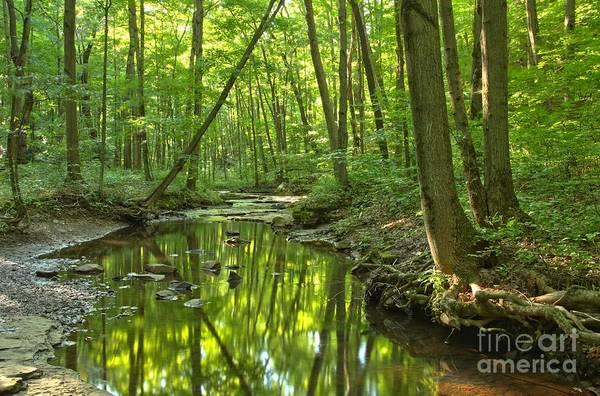 Hells Hollow Print featuring the photograph Tranquility In The Forest by Adam Jewell