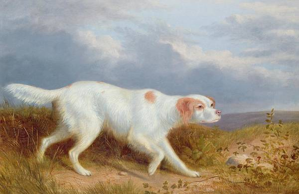 A Setter On The Moor Print featuring the painting A Setter On The Moor by Philip Reinagle