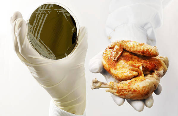 Campylobacter Sp. Print featuring the photograph Campylobacter Food Poisoning by Tim Vernon, Lth Nhs Trust