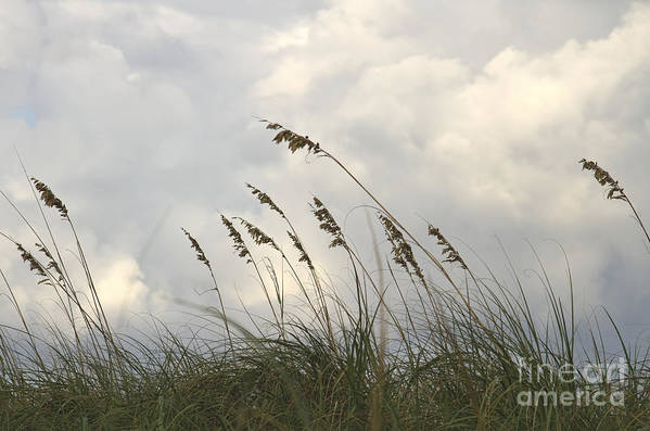 Sea Oats Print featuring the photograph Sea Oats by Blink Images