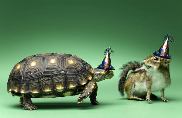 Horizontal Print featuring the photograph Turtle And Chipmunk Wearing Party Hats by Jeffrey Hamilton
