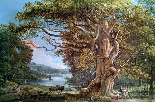 Ancient Print featuring the painting An Ancient Beech Tree by Paul Sandby