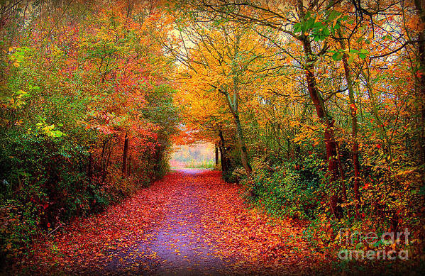 Autumn Print featuring the photograph Hope by Jacky Gerritsen