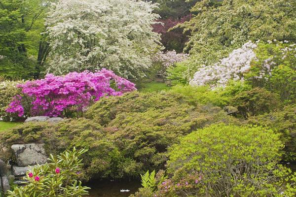 Japanese Garden Print featuring the photograph Asticou Azelea Garden - Northeast Harbor - Mount Desert Island - Maine by Keith Webber Jr