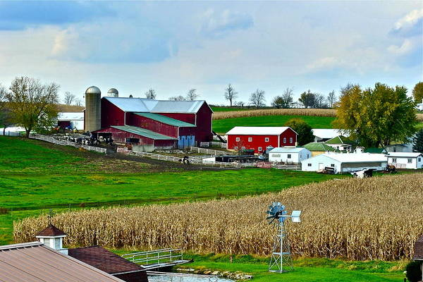 Farm Print featuring the photograph Down On The Farm by Frozen in Time Fine Art Photography