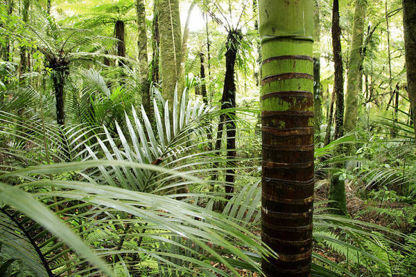 Botany Print featuring the photograph Rainforest by Les Cunliffe