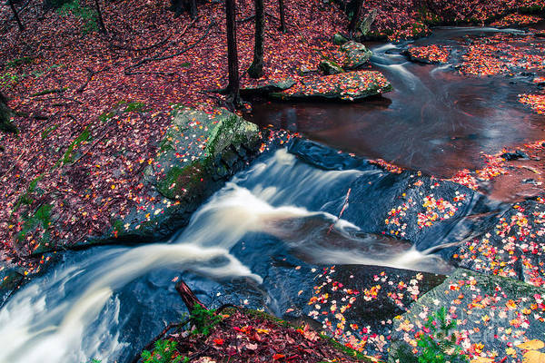 Leaves Print featuring the photograph Chesterfield Gorge New Hampshire by Edward Fielding
