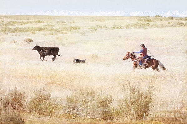 Cowboy Print featuring the photograph Round Up by Cindy Singleton