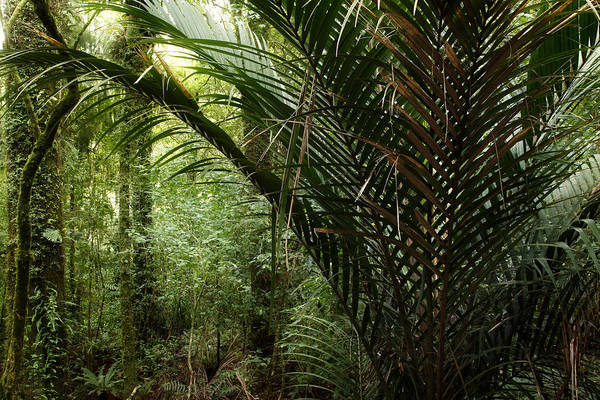 Botanical Print featuring the photograph Jungle by Les Cunliffe