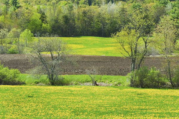 Spring Print featuring the photograph Spring Farm Landscape With Dandelion Bloom In Maine by Keith Webber Jr