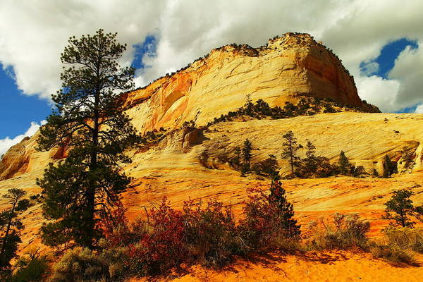Landscape Print featuring the photograph A Tree And Orange Hill by Jeff Swan