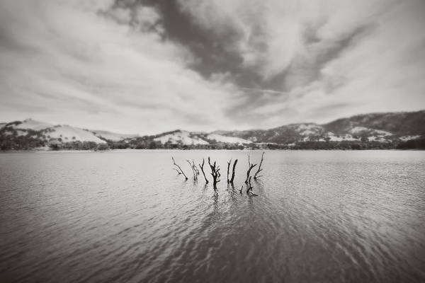 Lake Del Valle Print featuring the photograph All Together Now by Laurie Search