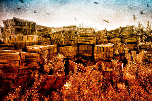 Apple Print featuring the photograph Apple Crates And Crows by Bob Orsillo