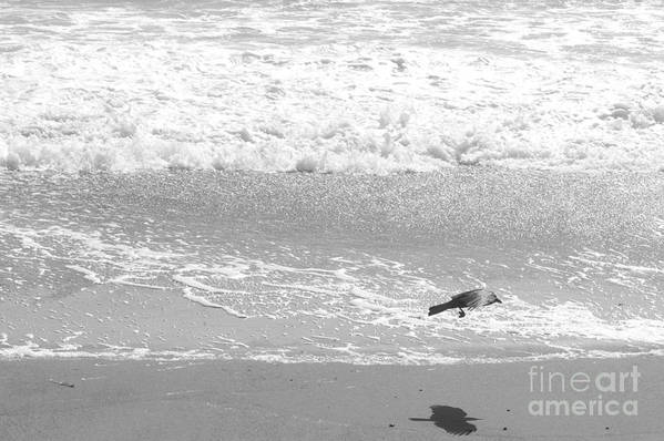 Beach Print featuring the photograph As The Crow Flies by Artist and Photographer Laura Wrede