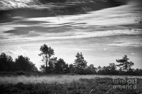 Tree Print featuring the photograph Ashdown Forest In Black And White by Natalie Kinnear