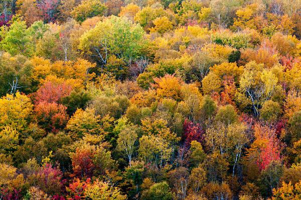 Autumn Print featuring the photograph Autumn Colors by Matt Dobson