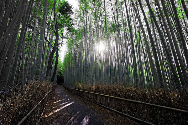 Bamboo Print featuring the photograph Bamboo Forest Path Of Kyoto by Daniel Hagerman