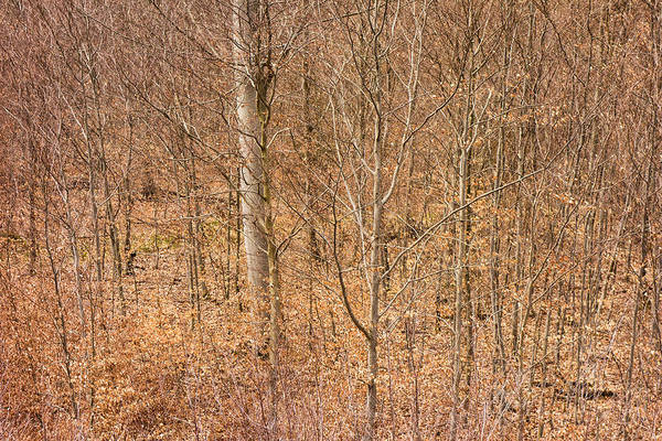 Trees Print featuring the photograph Beautiful Fine Structure Of Trees Brown And Orange by Matthias Hauser
