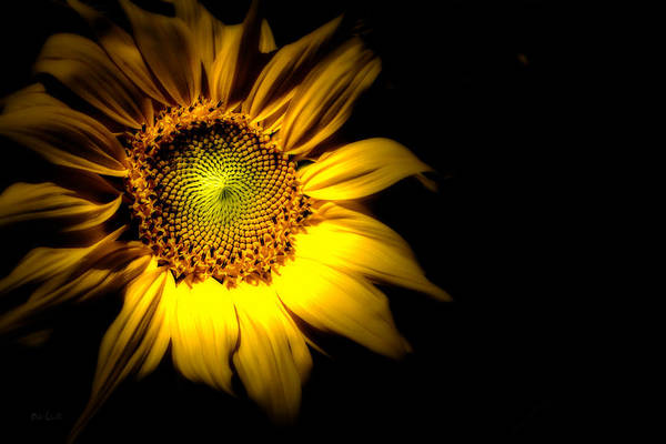 Sunflower Print featuring the photograph Between Here And There by Bob Orsillo