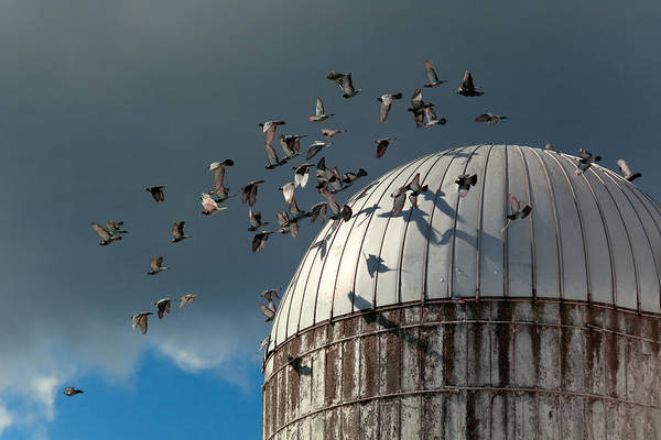 Silo Print featuring the photograph Bird - Birds by Mike Savad
