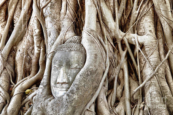 Asia Print featuring the photograph Buddha Head In Tree Wat Mahathat Ayutthaya Thailand by Fototrav Print