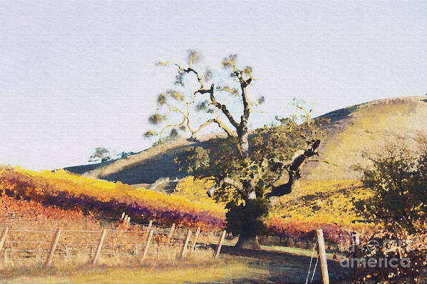 California Wine Country Print featuring the painting California Vineyard Series Oaks In The Vineyard by Artist and Photographer Laura Wrede