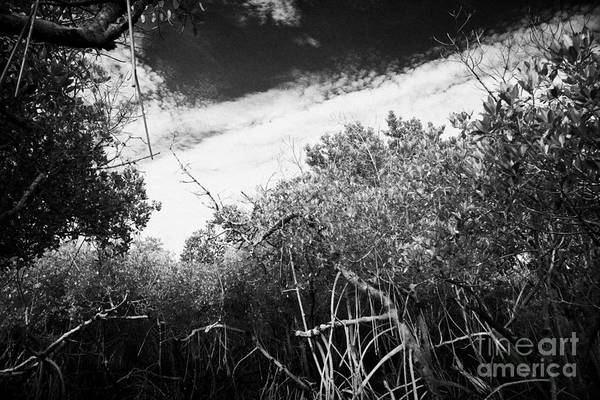 Florida Print featuring the photograph Canopy Of The Mangrove Forest In The Florida Everglades Usa by Joe Fox