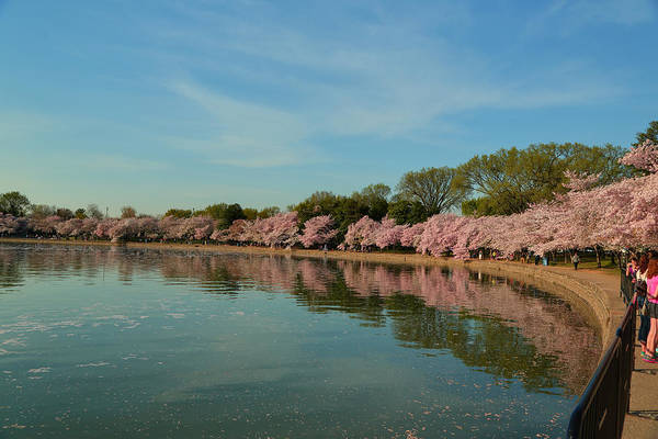Architectural Print featuring the photograph Cherry Blossoms 2013 - 087 by Metro DC Photography