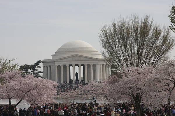 Cherry Print featuring the photograph Cherry Blossoms With Jefferson Memorial - Washington Dc - 01132 by DC Photographer