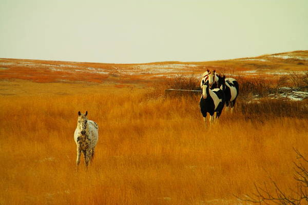Farms Print featuring the photograph Curious Ponys by Jeff Swan