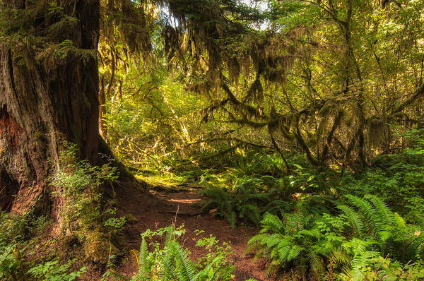 Hoh Rain Forest Print featuring the photograph Deep Into The Hoh Rain Forest by Rich Leighton