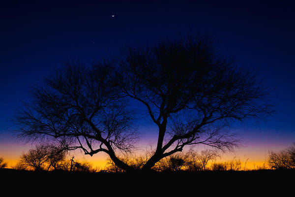 Outdoor Print featuring the photograph Desert Silhouette by Chad Dutson