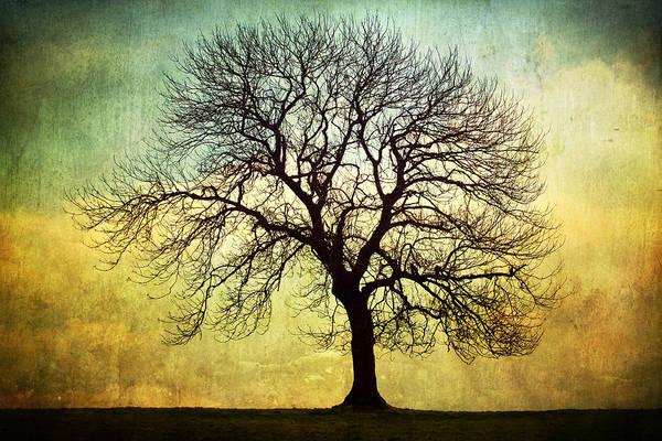 Digital Art Print featuring the photograph Digital Art Tree Silhouette by Natalie Kinnear