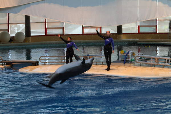 Inner Print featuring the photograph Dolphin Show - National Aquarium In Baltimore Md - 1212139 by DC Photographer
