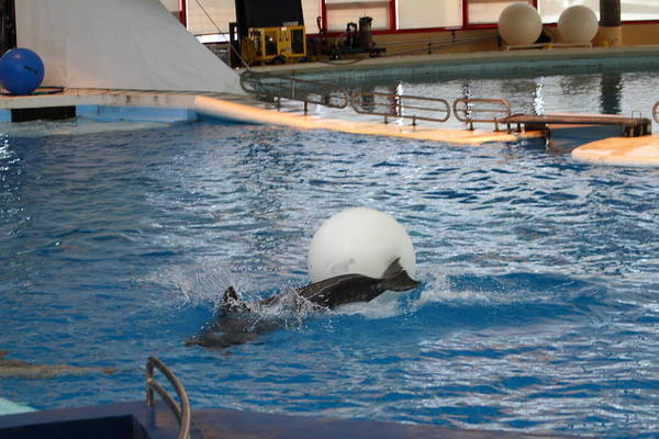 Inner Print featuring the photograph Dolphin Show - National Aquarium In Baltimore Md - 1212164 by DC Photographer