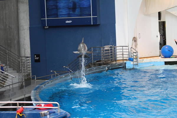 Inner Print featuring the photograph Dolphin Show - National Aquarium In Baltimore Md - 1212200 by DC Photographer