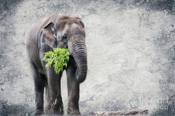 Wild Print featuring the photograph Elephant With A Snack by Tom Gari Gallery-Three-Photography