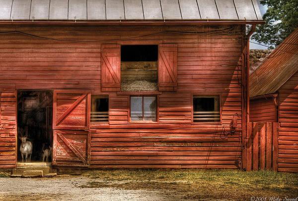 Savad Print featuring the photograph Farm - Barn - Visiting The Farm by Mike Savad