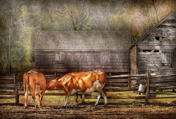 Savad Print featuring the photograph Farm - Cow - A Couple Of Cows by Mike Savad