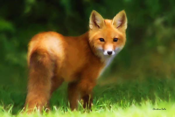 Fox Print featuring the painting Fiery Fox by Christina Rollo