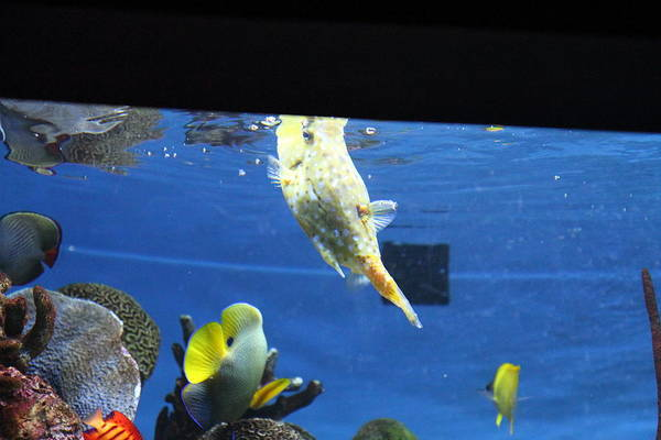 Inner Print featuring the photograph Fish - National Aquarium In Baltimore Md - 1212117 by DC Photographer