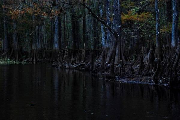 Fisheating Creek Print featuring the photograph Fisheating Creek 28 by Carol Kay