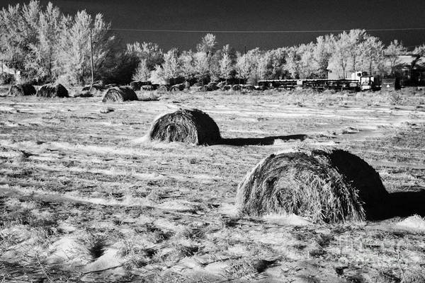 Frozen Print featuring the photograph frozen snow covered hay bales in a field Forget Saskatchewan Canada by Joe Fox