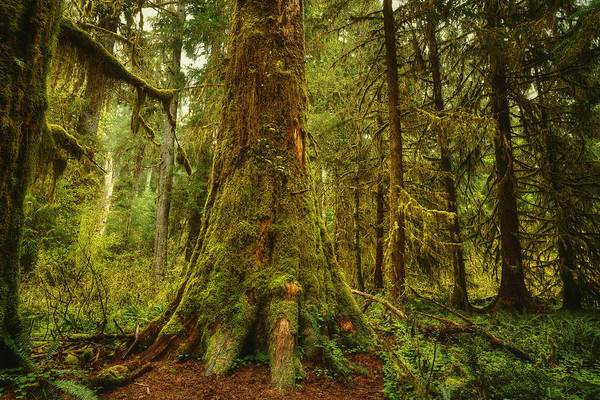 Woods Print featuring the photograph Giants Foot by Stuart Deacon