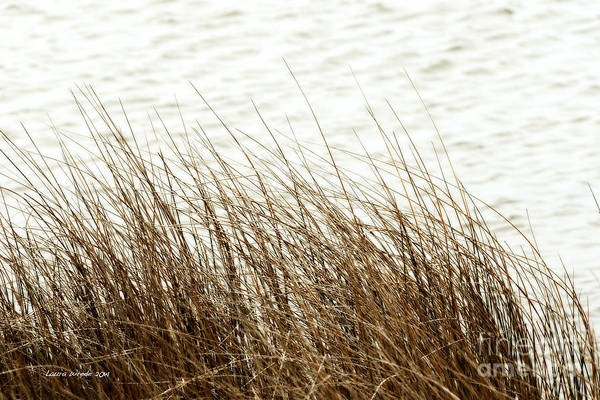 Shore Of Virginia Beach Print featuring the photograph Grass Down By The Shore Of Virginia Beach by Artist and Photographer Laura Wrede