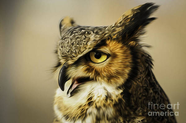 Great Horned Owl Print featuring the photograph Great Horned Owl by Julieanna D