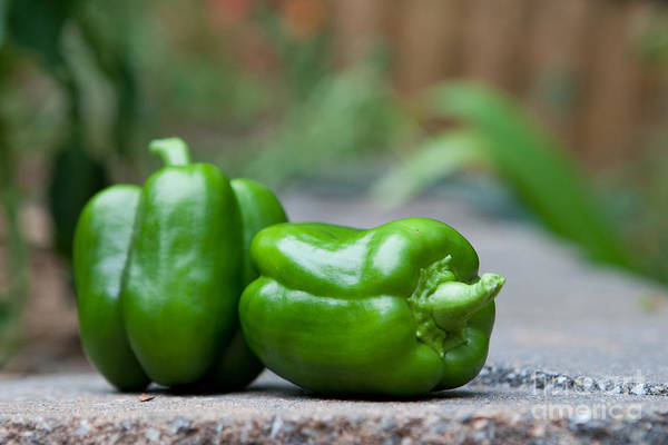 Food Print featuring the photograph Green Peppers by Kay Pickens