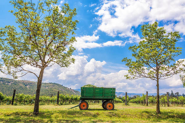 Villa De Leyva Print featuring the photograph Green Wagon And Vineyard by Jess Kraft